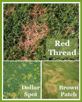 Lawn Fungus Types Red Thread Brown Patch Dollar Spot