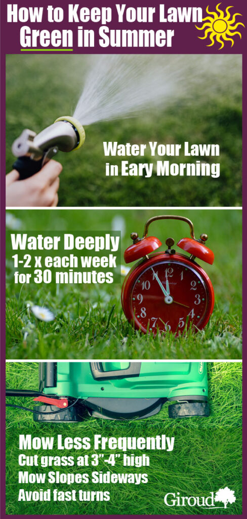 help your keep your lawn green in summer